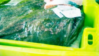 pescado congelado10